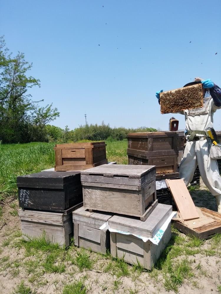 野々山養蜂園